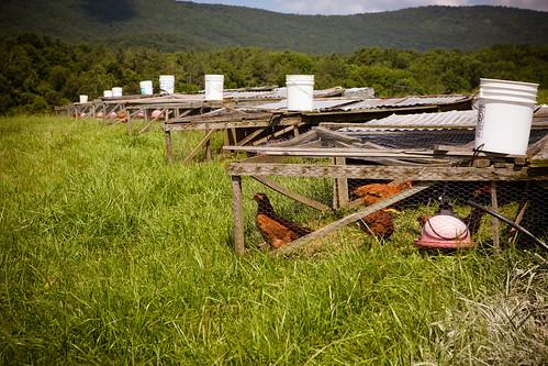 Polyface Farm 2012-0070.jpg