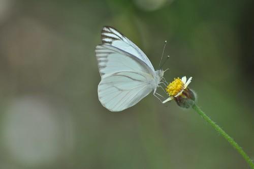 flowers butterfly johor muar westmalaysia