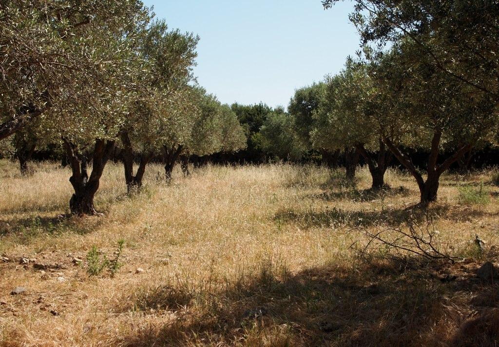 Crete village walk