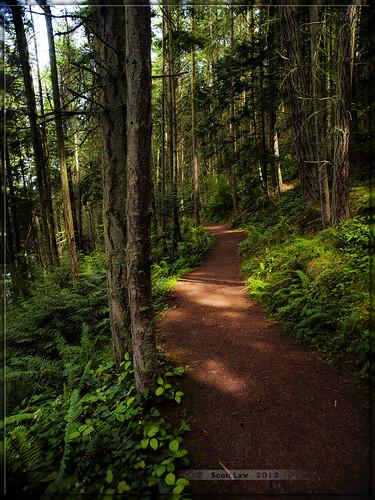 trees light usa washington path olympus trail deceptionpass om30