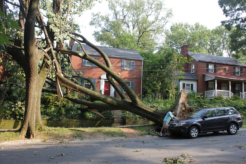 washington dc derecho: big tree down