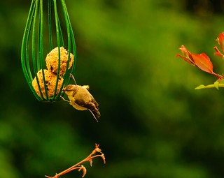 The bird feeder_2012 07 06_3672.jpg
