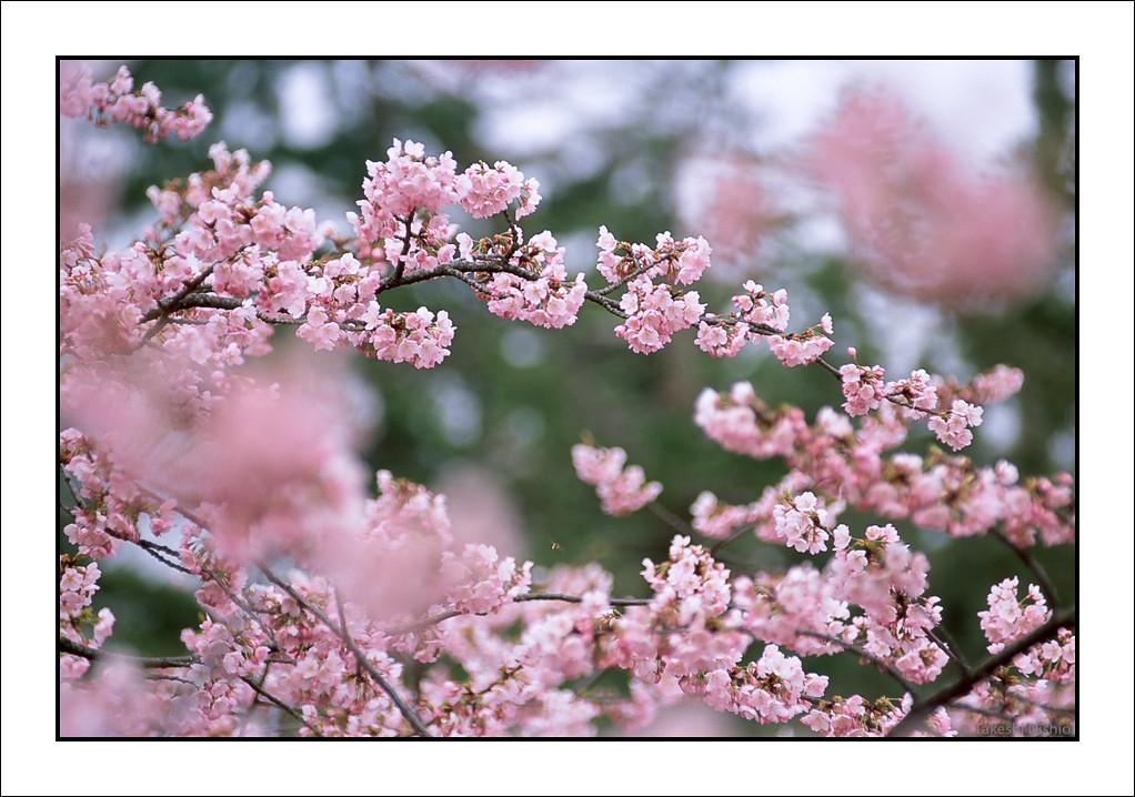 濃い色 / Deep Pink