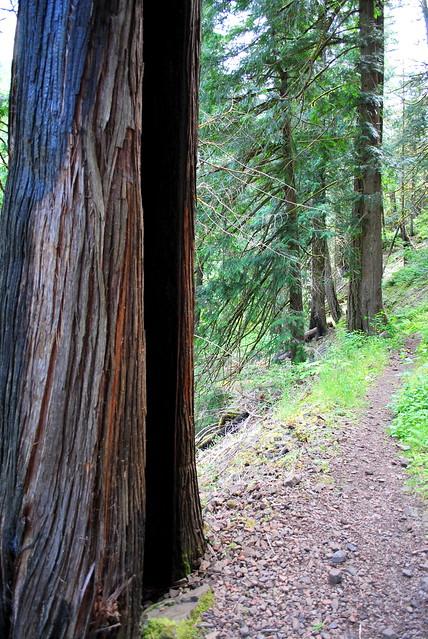 Clackamas River Trail