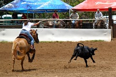 animal sports, rodeo, cattle-like mammal, equestrianism, equestrian sport, tradition, sports, charreada,