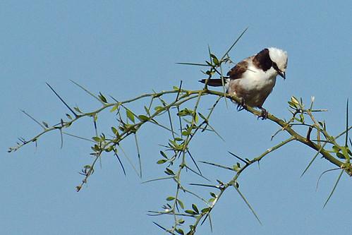 thornbush photo