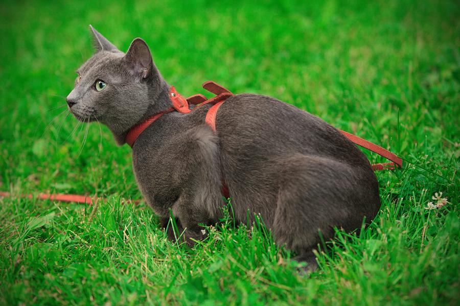 Фотосъемка животкных, фотосессия кота, фотосъемка кошек