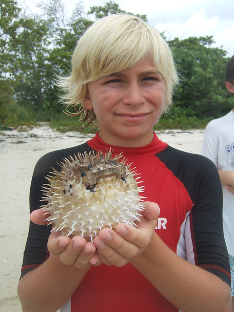 Connor catches a long-spined burrfish!