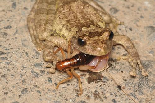 カエルと虫