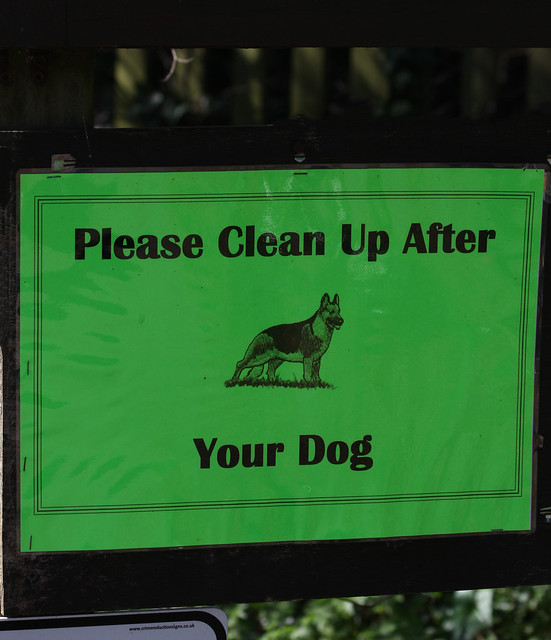 how to clean up after your dog