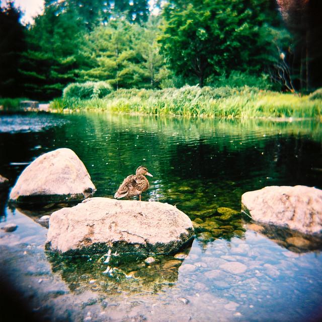 Holga et l'étang (et les rats)