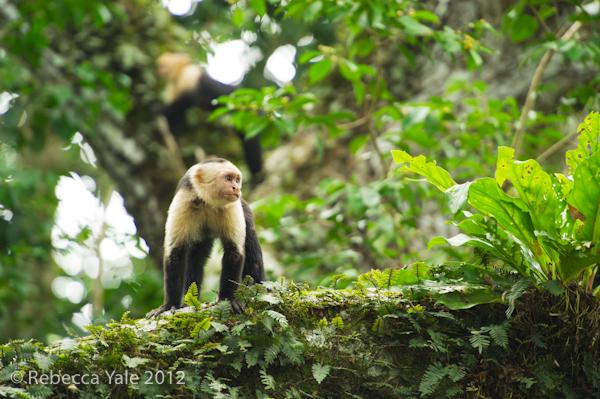 RYALE_Costa Rica_11