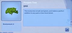 Pongam Tree
