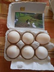 One Planet Market - duck eggs
