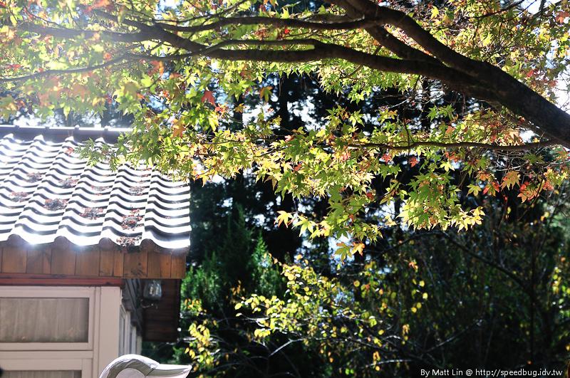福壽山農場楓紅-37