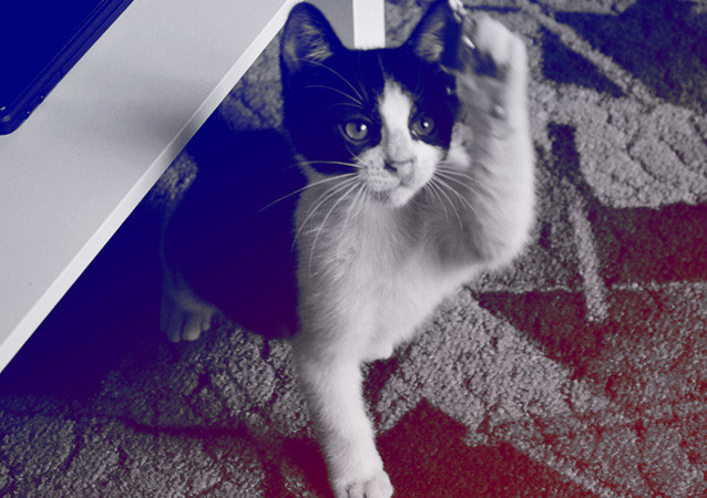 Puss 01