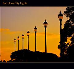 yellow, evening, silhouette, dusk, sunset,