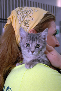 Woman wearing a yellow bandana holding a gray kitten