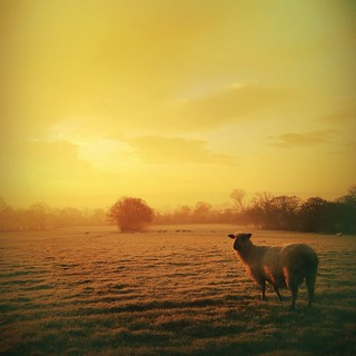 Dawn Near Kirkby Overblow, Lower Wharfedale, Yorkshire