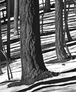 RB_Yosemite Black-and-White