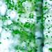 Tage im Mai by flowerpics09