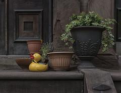 Duck Planter