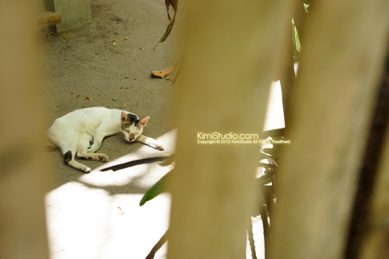 2012.04.19 Philippines-Cebu-Caohagan Island-081