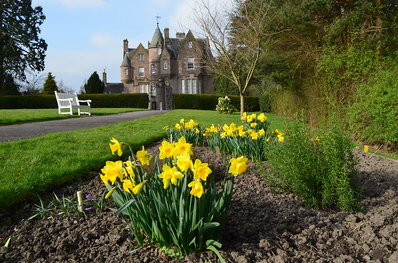 Tour Scotland Photograph Daffodils Balhousie Castle Perth March 16th 03