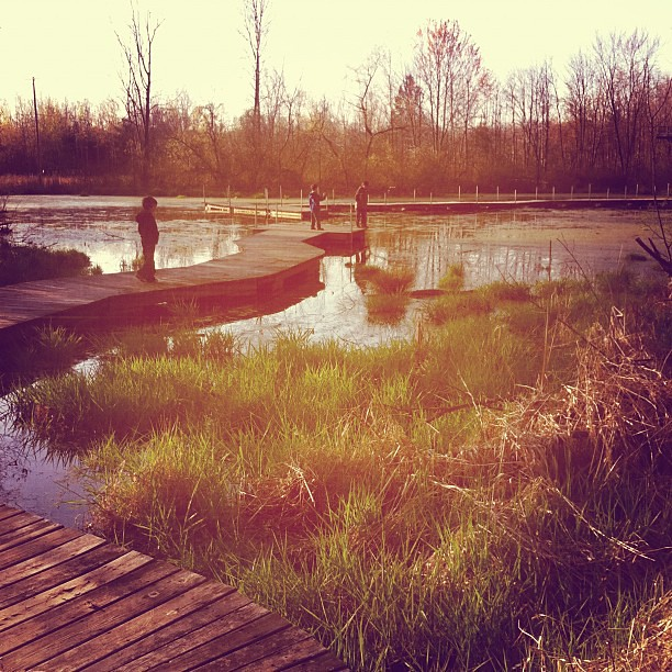 Wetlands walk, 2. #grandrapids #nature