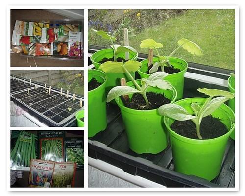 My Gardening - Indoors