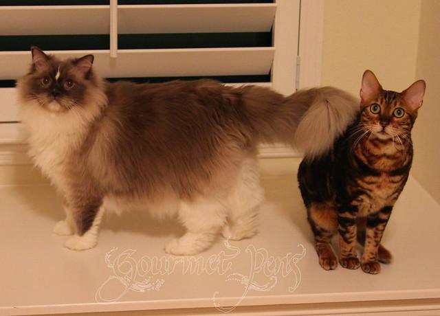 Tyco & Koa