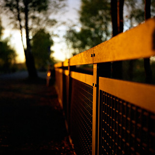 Fleeting Light And A Fence.....