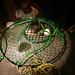 2012.04.27 SFSU Junior Crabs