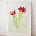 Leucadendron Artist Print