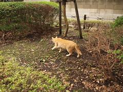 ちょっと遠くのネコたち (cats a little far away)