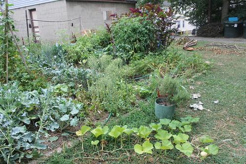 July 2012 garden