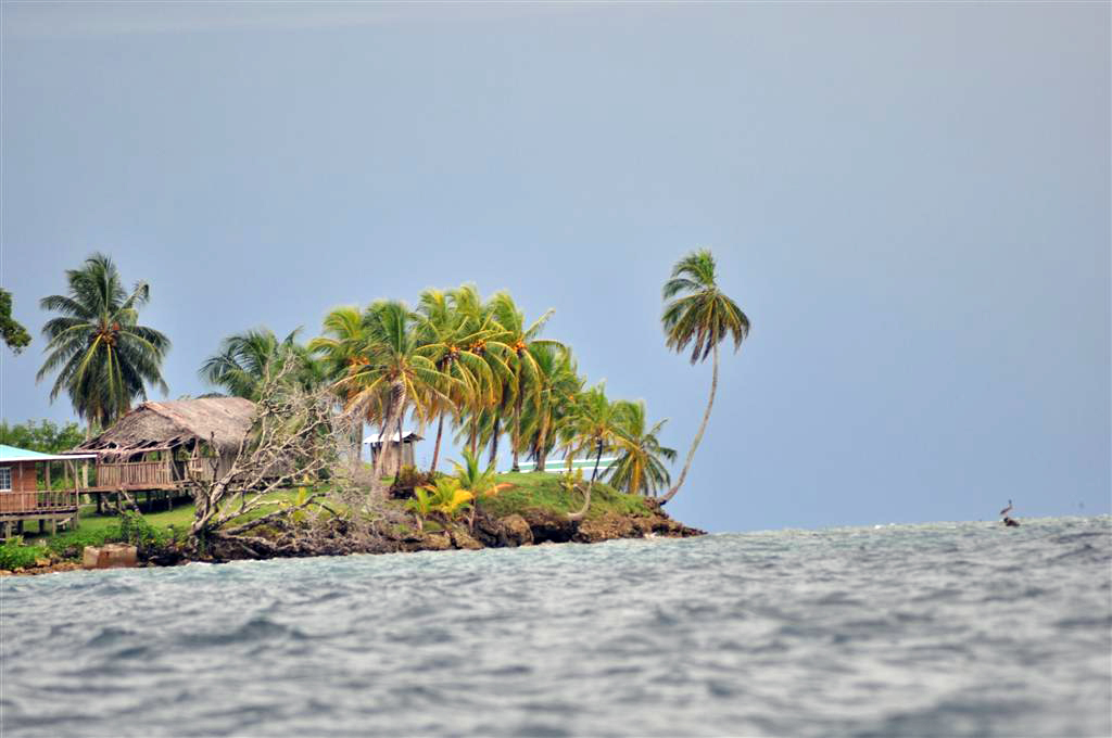 Vegetación Virgen de Isla Bastimentos bocas del toro - 7598213246 2a8844dd90 o - Bocas del Toro, escondido destino vírgen en Panamá