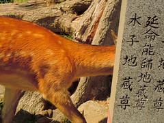 Nara · Japan