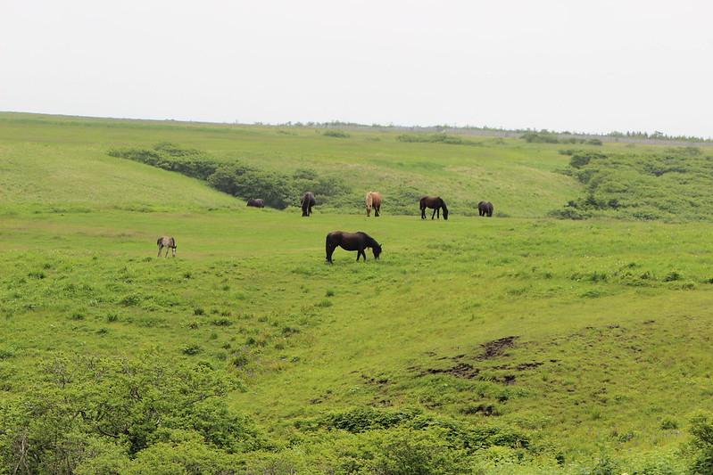 納沙布岬へ行く途中に馬