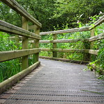 2012 - 08 - 02 - Alyn Waters Country Park - HS10 - 0016