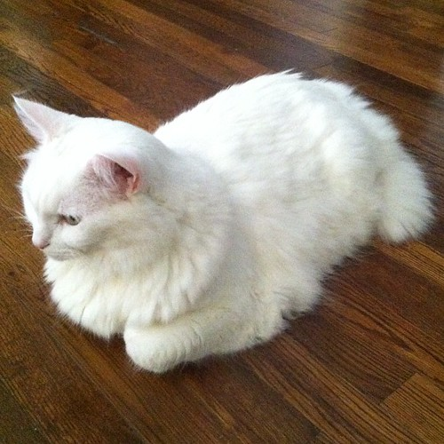 Nilla loaf.