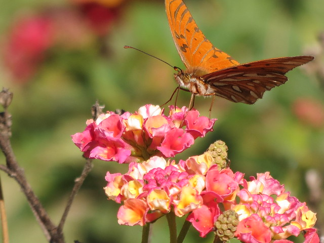 Butterfly flying away - photo#48