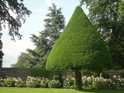 Hardwick Hall, noddy tree