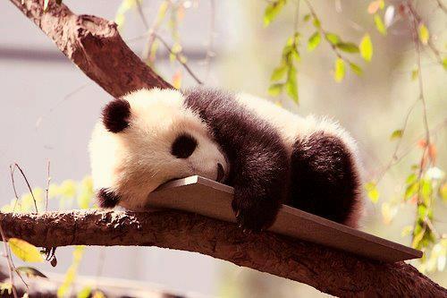 sleepingpanda