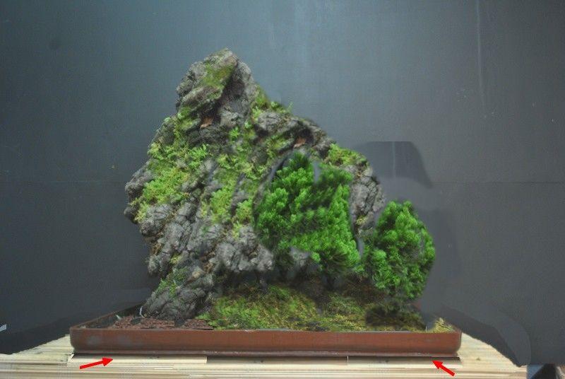 Alpine forest in the tropics 8169848230_0e9e77d645_c