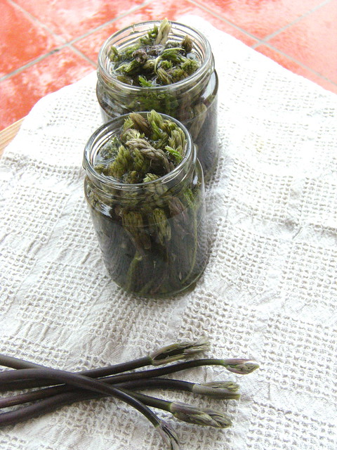 Ruscus aculeatus in vinegar - Bruscansi sotto aceto