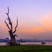 A famous tree at U Bein wooden bridge, Burma. by Wa Na Sa IMM