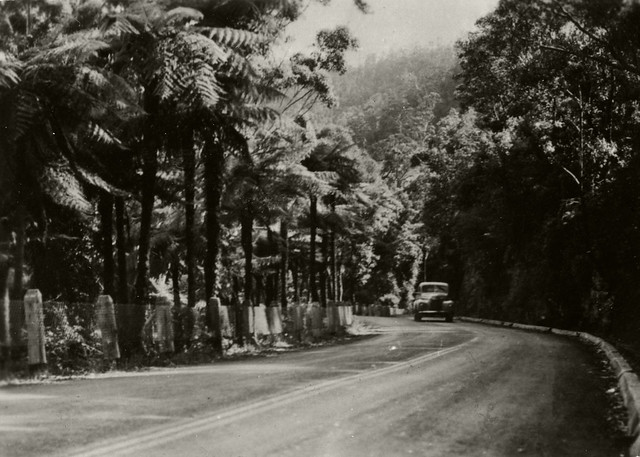 Bulli Pass undated RAHS [RAHS Photograph Collection]