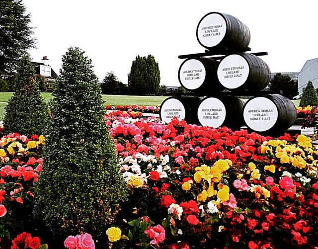 Distillery Dawn #barrels #scotch #singlemalt #auchentoshan #flowers #scotland #lawn #nightshift