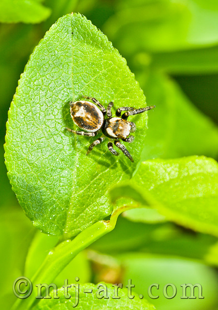 Hämähäkkieläin